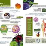 La Biología y el medio ambiente