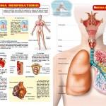 Guía visual del cuerpo humano