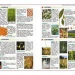Las hierbas aromáticas