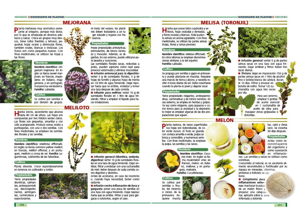 Las plantas curativas ediciones panamericanas for Planta decorativa con propiedades medicinales crucigrama