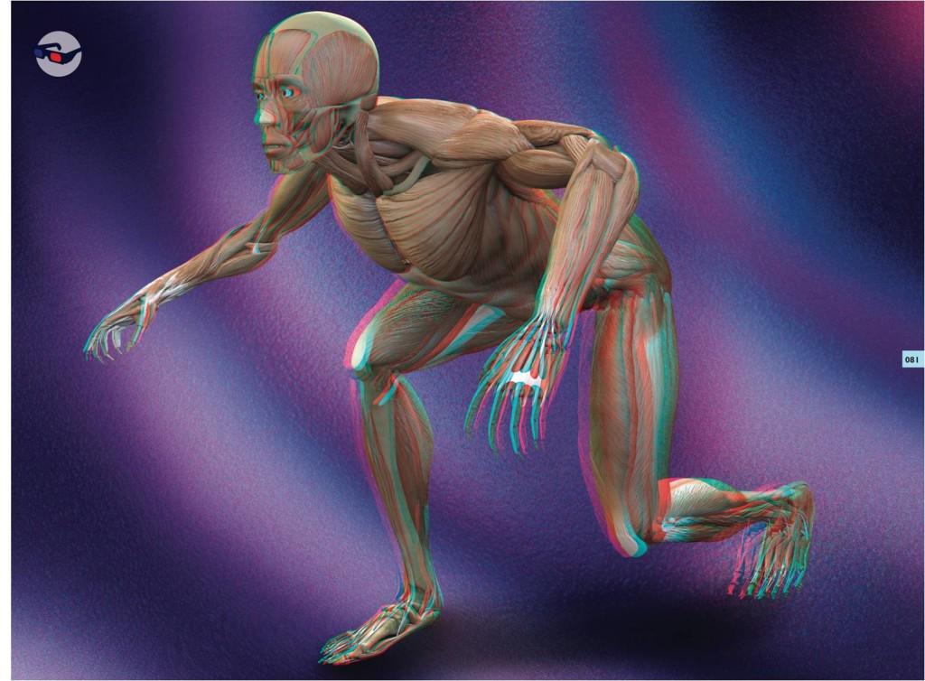 El cuerpo humano 3d ediciones panamericanas for Cuerpo humano interior