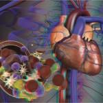 El Cuerpo Humano 3D